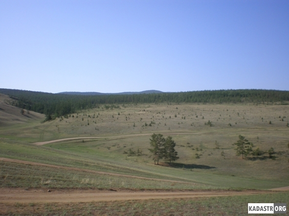 Зарастание пашни хвойными породами деревьев (район пос. Хужир)