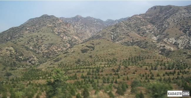 Насаждения деревьев  защищают склоны от эрозий