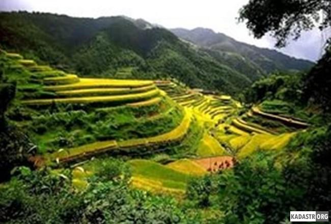 Экологическое земледелие в Китае