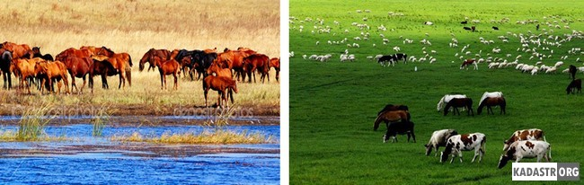 Животноводство во Внутренней Монголии вновь возрождается